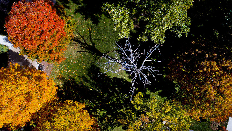 Aerial view of trees outside Andrews Hall; links to news story 83 English and Film Studies majors named to Dean's List