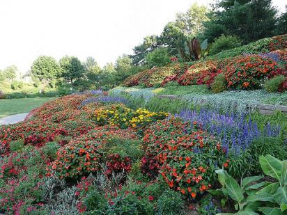 flowers in Sunken Gardens