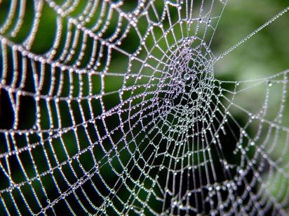 Your professional network is a lot like a spiderweb