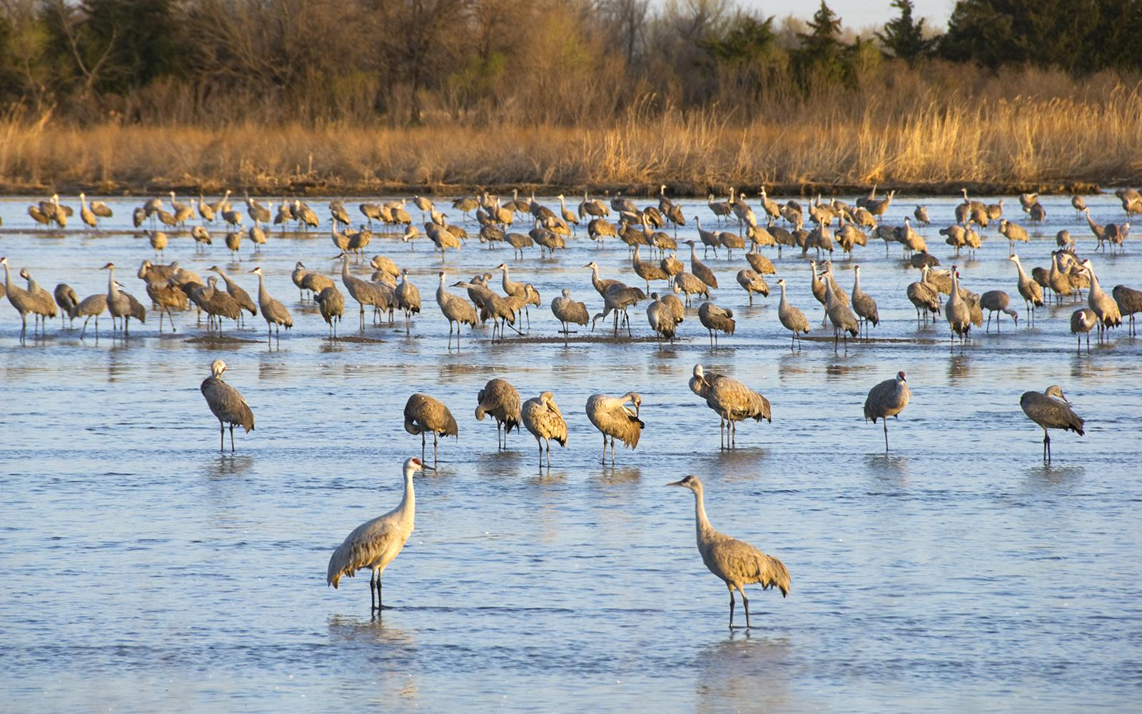 Cranes in water