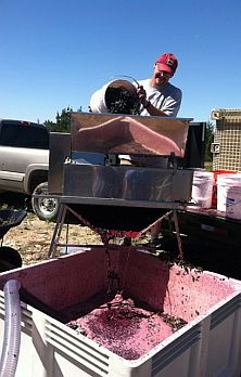 Pouring Grapes into the Hopper