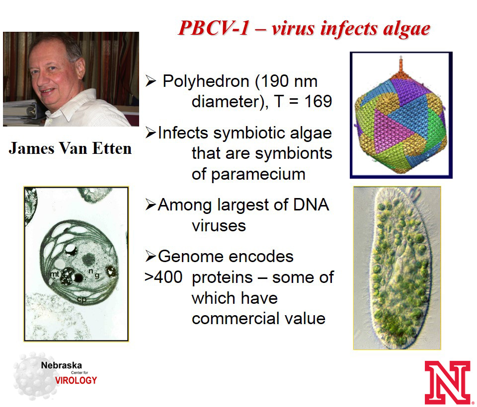 Current Research | Nebraska Center for Virology | Nebraska